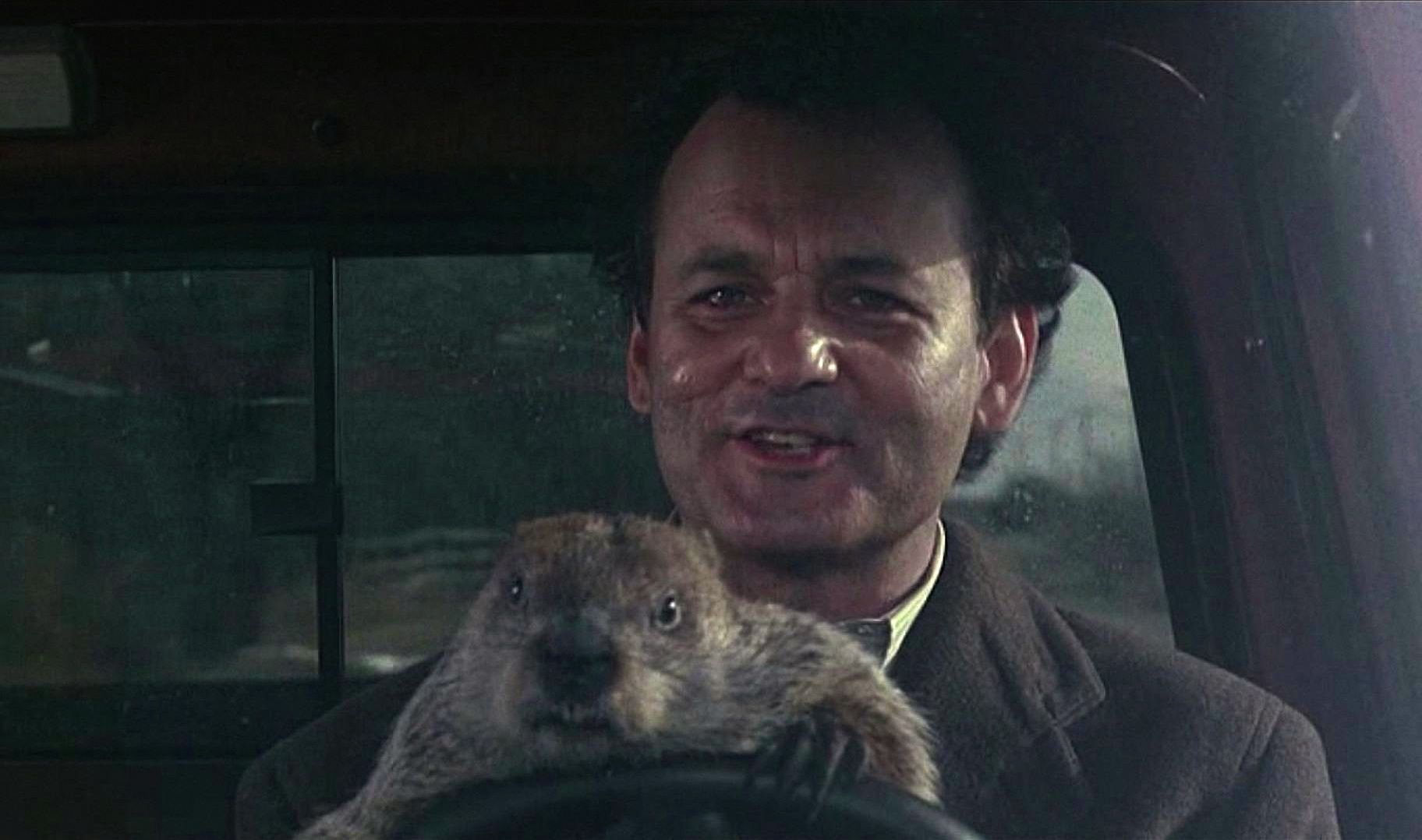 Bill Murray et une marmotte dans Un jour sans fin
