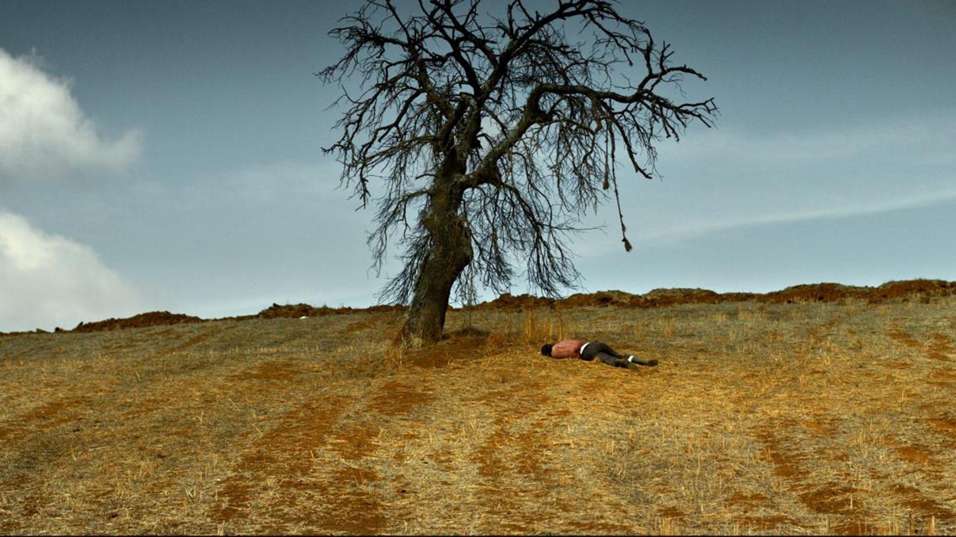 Le Poirier sauvage de Nuri Bilge Ceylan